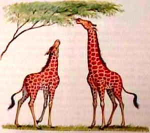 lamarck_giraffes
