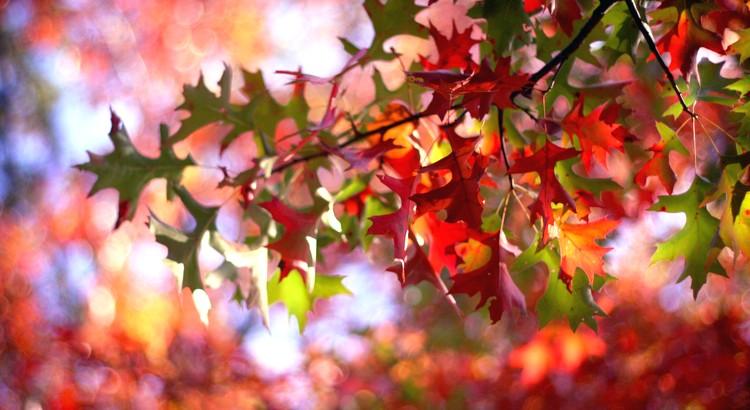 Der Herbst ist des Jahres schönstes farbiges Lächeln. - Willy Meurer