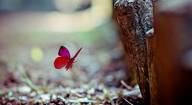 Nichts an einer Raupe sagt dir, dass sie ein Schmetterling werden wird. - R. Buckminster Fuller