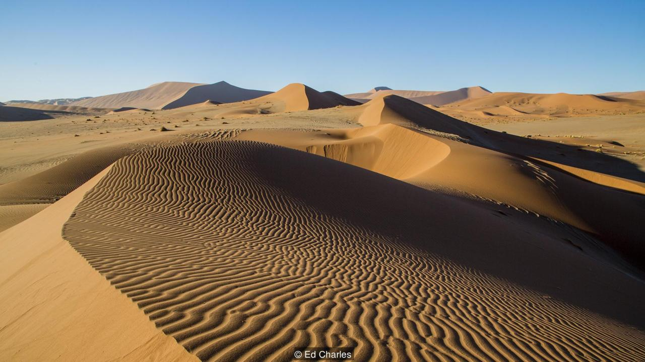 Animal Face Wallpaper The Meaning And Symbolism Of The Word 171 Desert 187