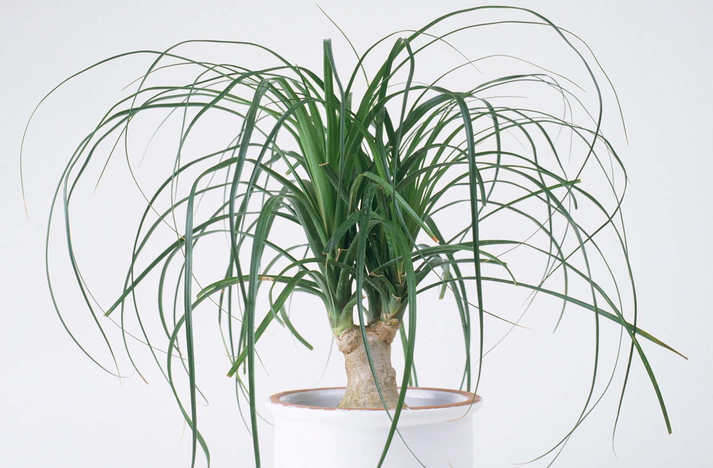 Indoor Plants These Are The Trendy Indoor Plants That Will Be Everywhere In 2019
