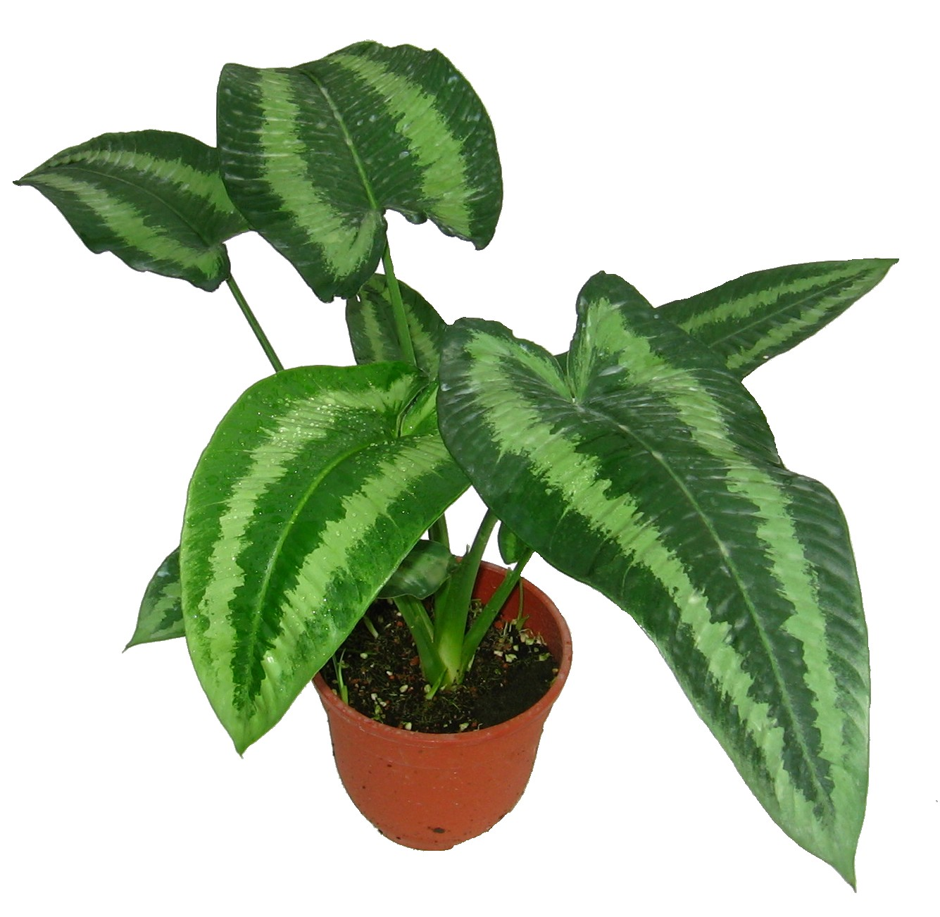 Where To Buy Indoor Plants Online Malaysia Indoor Plants Wellgrow Horti Trading