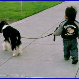 Oreo and Kento go for a walk.... what a Wells trained dog!