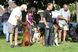 Socialization in the Reactive Dog Group