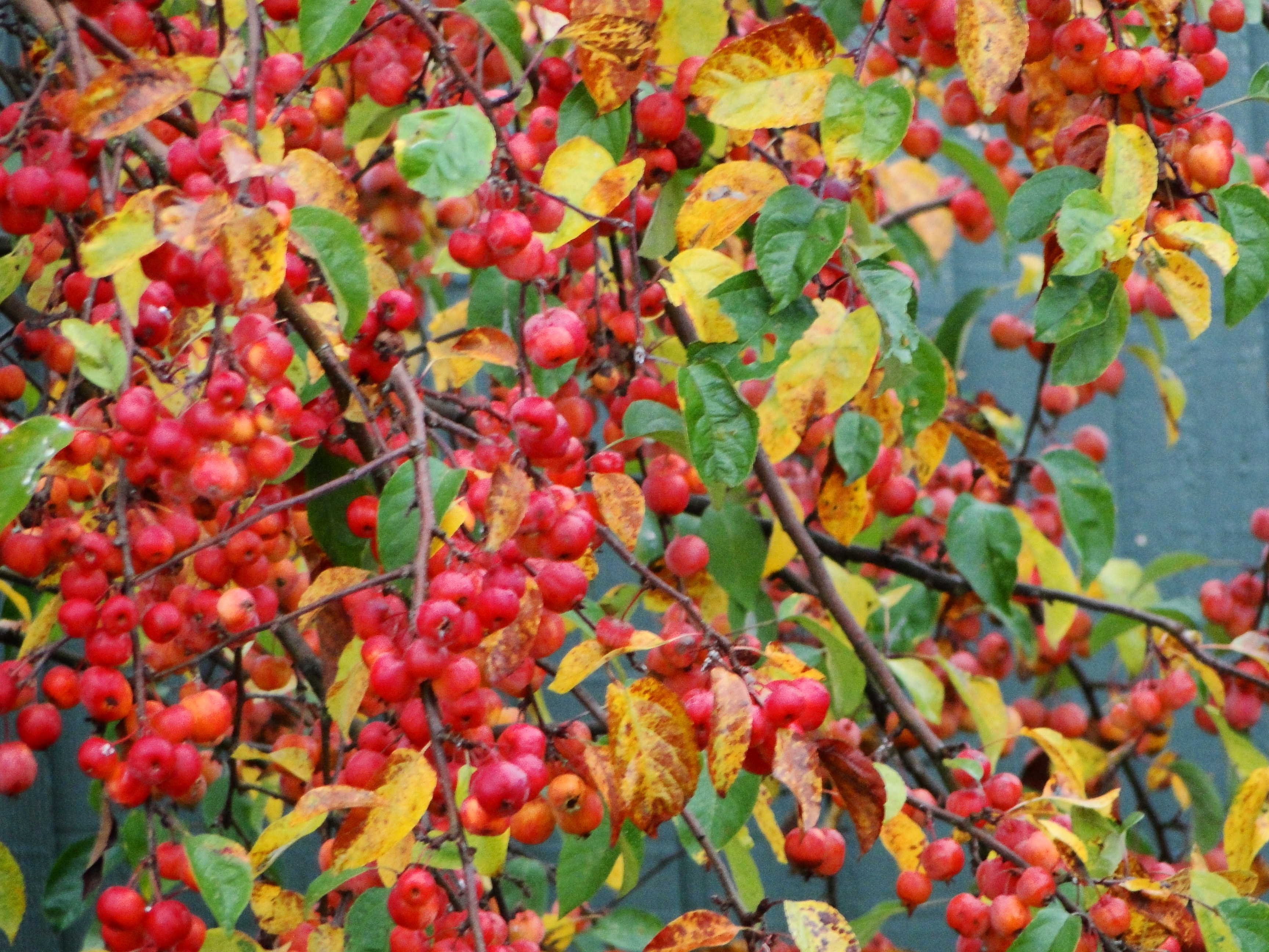 Fall Bird Feeder Wallpaper Crab Apple Tree Wellywoman