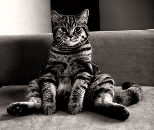 Cute Wallpapers To Say I Love You 16 Pictures Of Cats Sitting Like Humans We Love Cats And