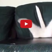 Cats Smooshing Into Couches