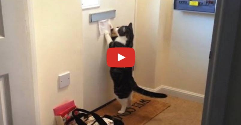 Hilarious! These Kitties Collect the Mail!