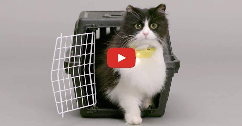 Cat Collar Translates Meows Into Human Speech !!