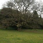 Look at this huge old tree!
