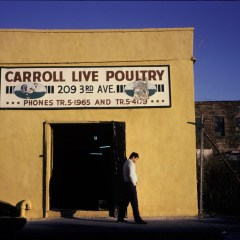 Live Poultry, Brooklyn, NY c. 1983