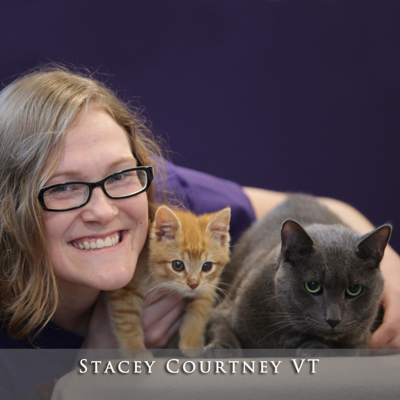 Stacey Courtney VT