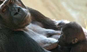 Breastfeeding: Remembering Our Mammalian Roots