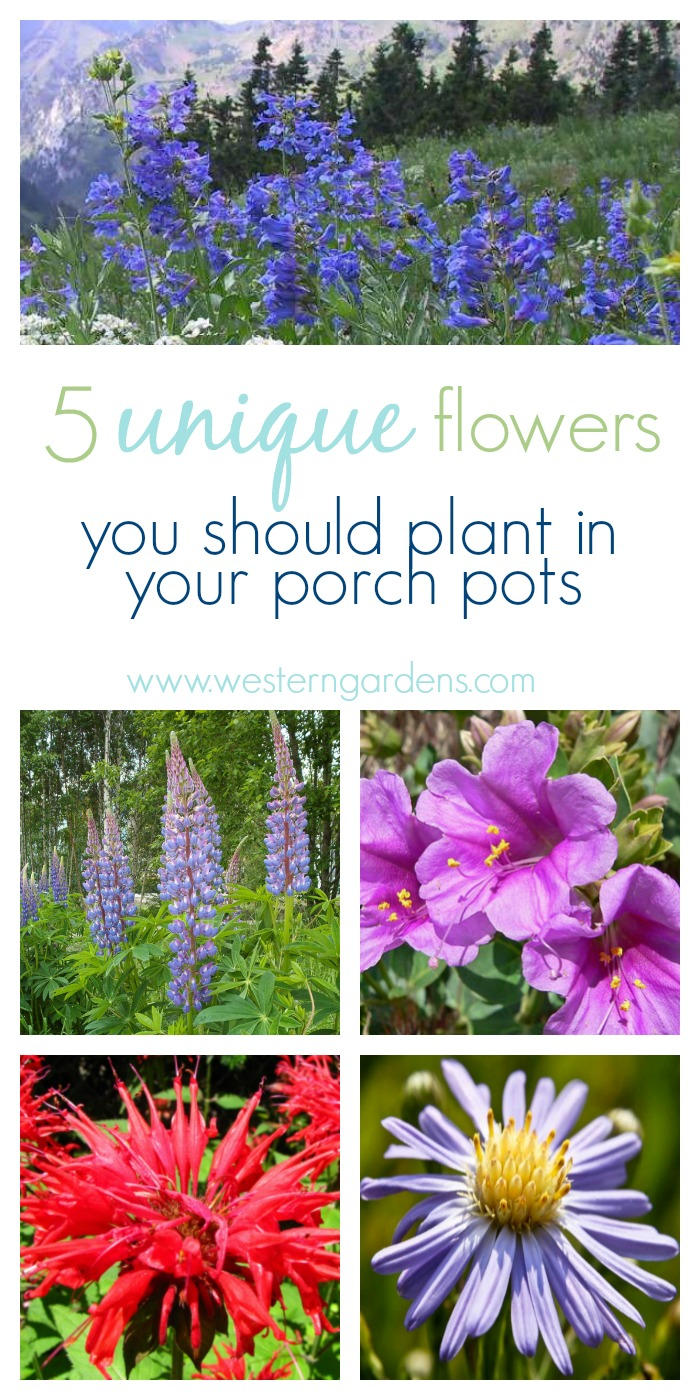 Unique Outdoor Flower Pots 5 Plants For Utah Porch Pots Western Garden Centers