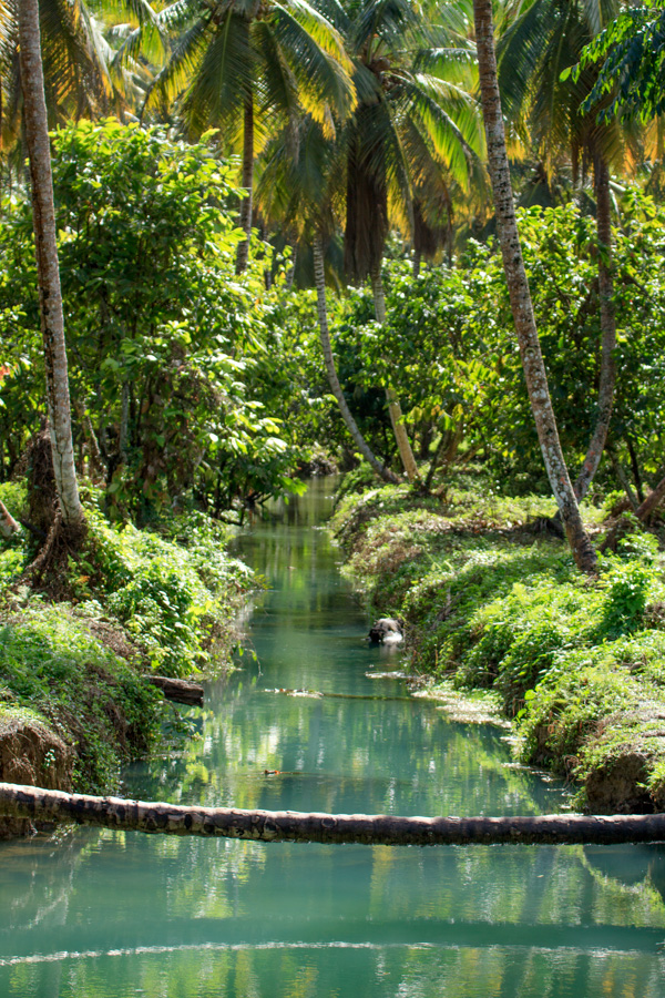Jungle Wallpaper With Animals A Fresh Look At Landscapes Of The Dominican Republic We