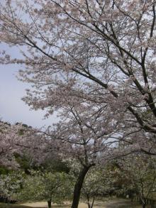 miyajima7