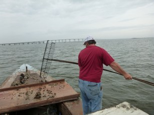 Shawn Hartsfield tonging for oysters to be used in the Apalachicola Bay experiment