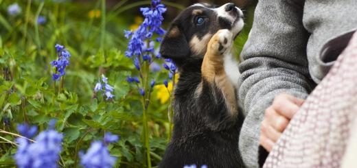 puppy-779291_1280