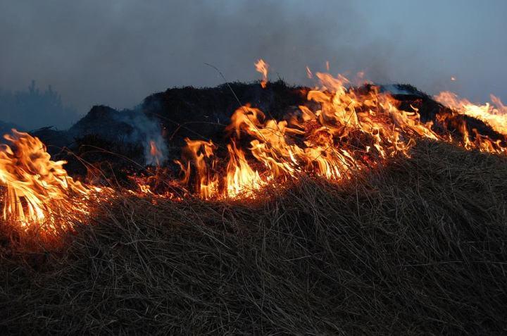 wypalanie traw gryfino