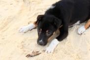 Cute Beach Puppy
