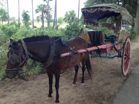 Inwa Horse & Carriage Myanmar
