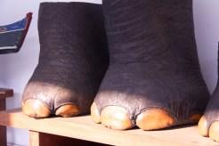 Trophy Elephan -Feet