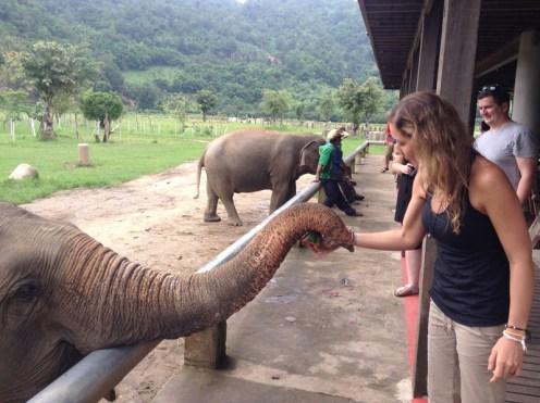 Kristin Butler feeding an elephant