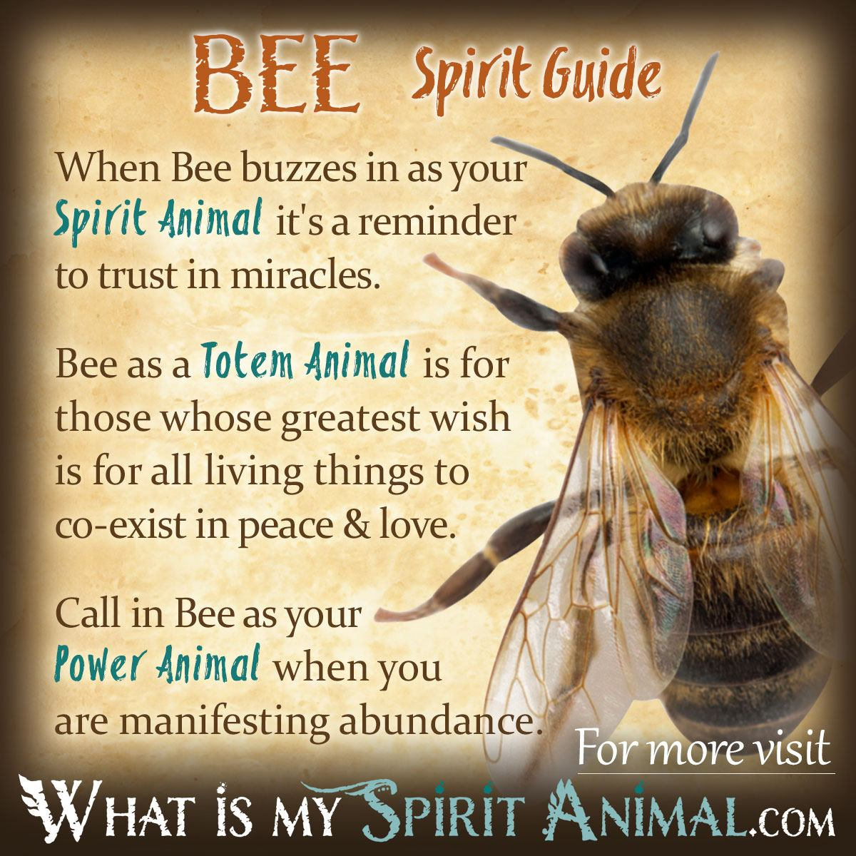 Honey Betekenis Bee Symbolism And Meaning Spirit Totem And Power Animal
