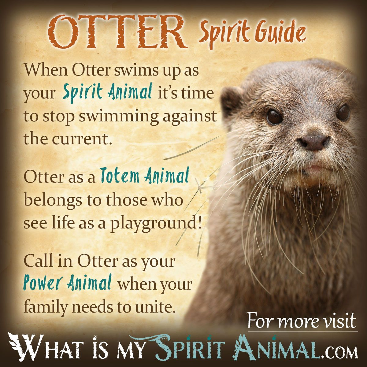 Willpower Quotes Wallpaper Otter Symbolism Amp Meaning What Is My Spirit Animal