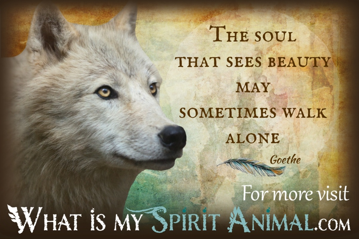 Fall Wallpaper Horses Wolf Quotes Amp Sayings Animal Quotes Amp Sayings