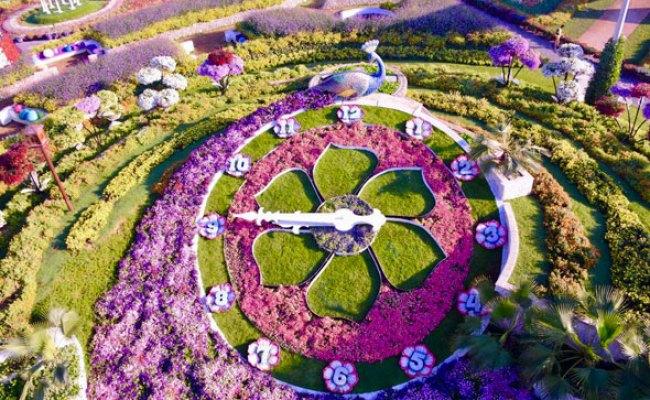 Dubai Miracle Garden Is Re Opening On November 7