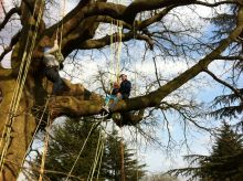 The Great Big Tree Climb at Morden Hall Park! Wed 24 Jul & Wed 21 Aug