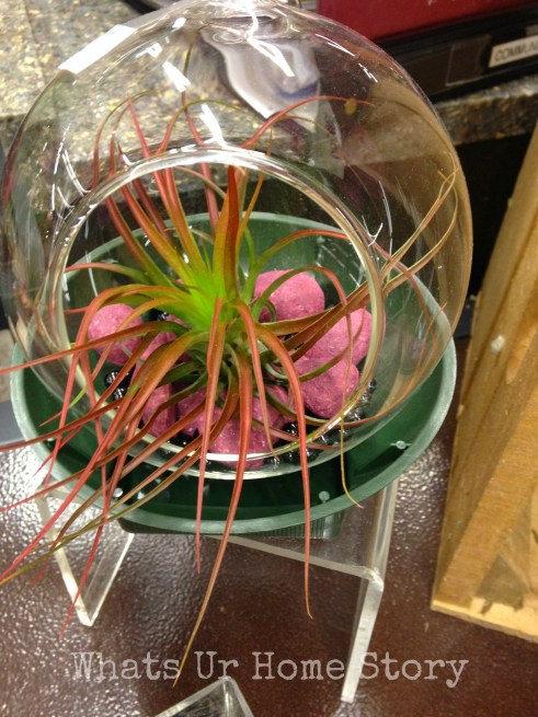 simple air plant terrarium