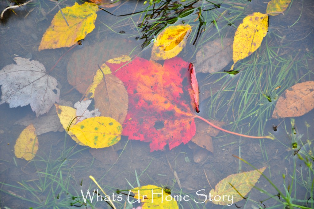 Fall leaf in a puddle of water