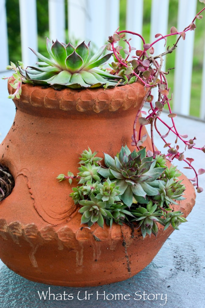 container garden ideas-hens and chicks in a strawberry pot