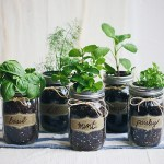 Pairing Herbs With Your Food ║ The Essentials
