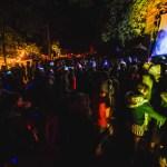 Illum Forest lights