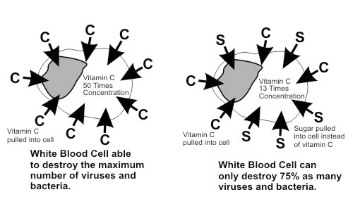 Sugar-Immune-System