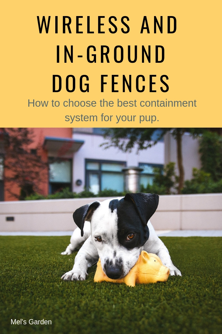 Guide To The Best Wireless Dog Fence And In Ground Fence Mel S Garden