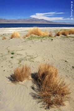 Golden weeds by Walker Lake