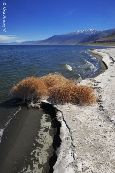 Along the salty shore