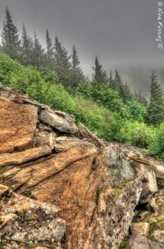 Foggy trail views