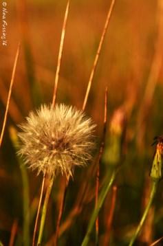 Weeds in soft light