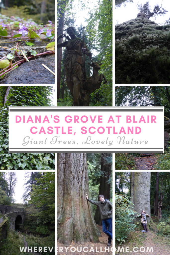 Diana's Grove at Blair Castle looks like an amazing place to visit in Scotland! It's near Killiecrankie