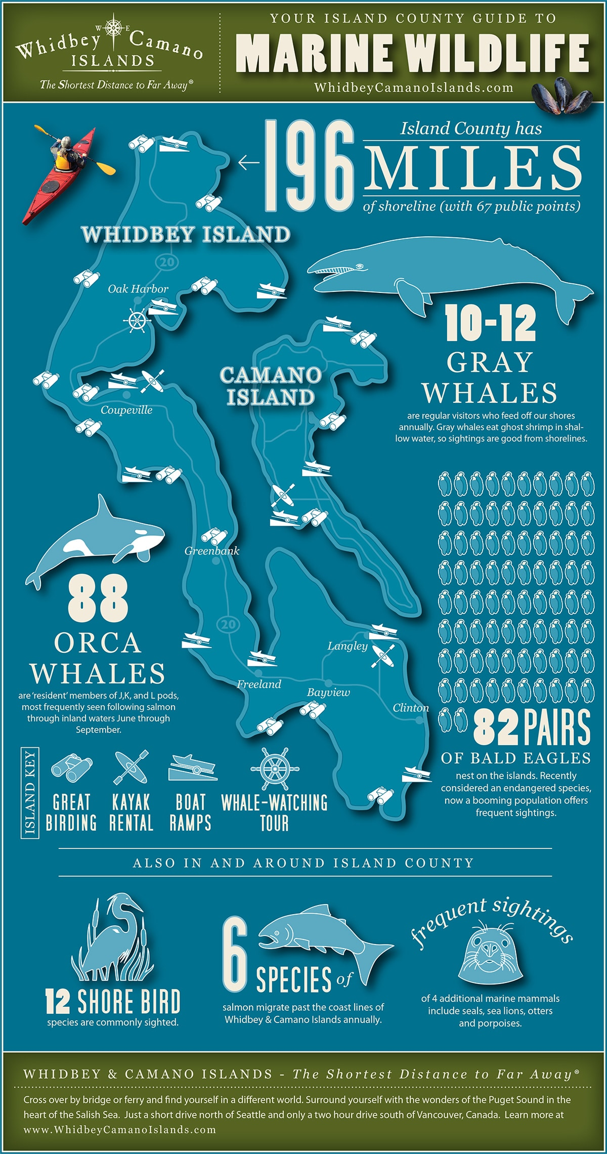 Hd Car Wallpapers Free Download Zip Marine Wildlife Infographic Whidbey And Camano Islands