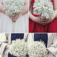 gypsophila flowers