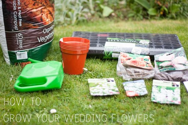 Grow Wedding Flowers DIY