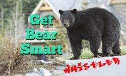 Bear-Smart