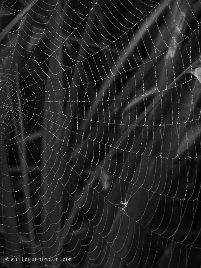 halloween amp spider webs white gunpowder