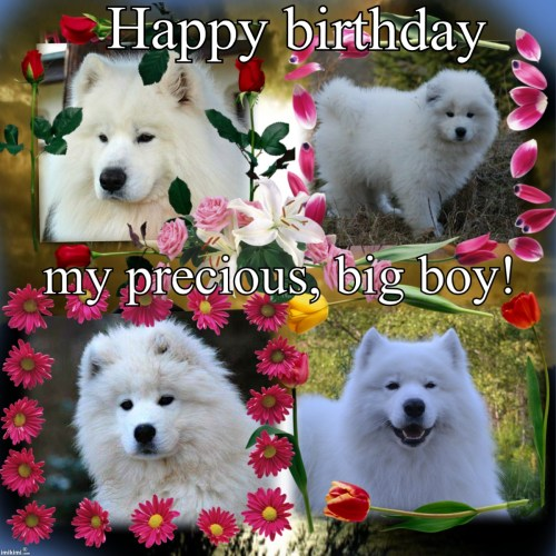Antique Years Happy Our Big Boy Kennel Serako Happy Birthday Big Boy German Happy Birthday Big Boy Caitlyn Jenner